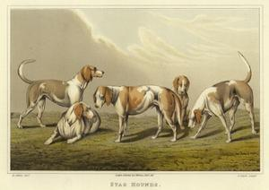 Stag Hounds by Henry Thomas Alken