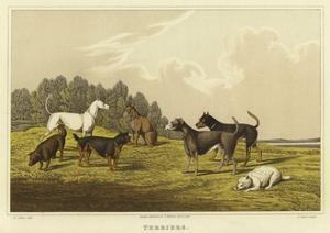 Terriers by Henry Thomas Alken