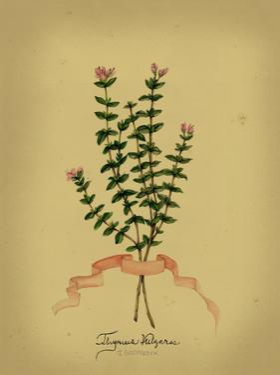 Herb Series VI
