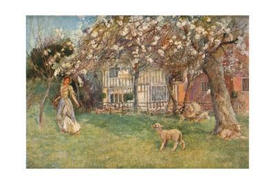 'Lambs', c1904