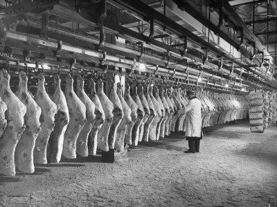 Rows of Meat in Storage at Bronx Warehouse