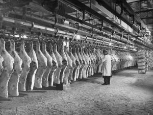Rows of Meat in Storage at Bronx Warehouse by Herbert Gehr