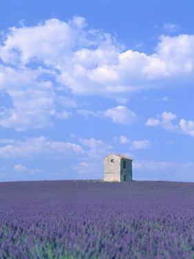 Blooming lavender and stone house in France by Herbert Kehrer
