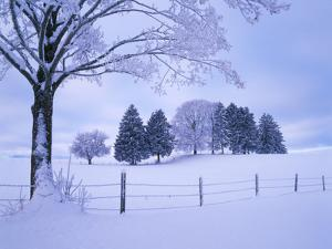 Germany, Bavaria, AllgŠu, Snow Scenery, Trees by Herbert Kehrer