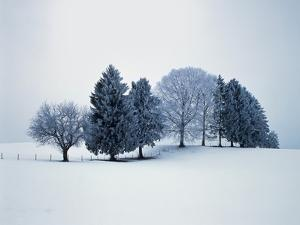 Group of trees in winter by Herbert Kehrer