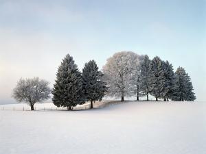 Landscape, Trees, Winter by Herbert Kehrer