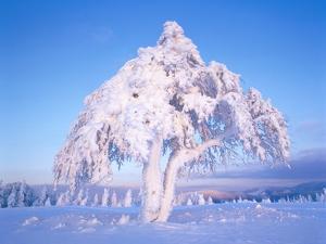 Snow scene in winter by Herbert Kehrer