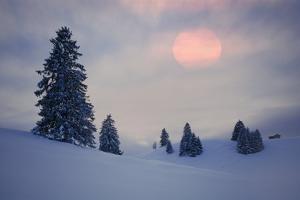 Snow Scenery, Conifers, the Sun, Cloudies, Dusk, Germany, Winter Scenery, Trees, Snow, Frost by Herbert Kehrer