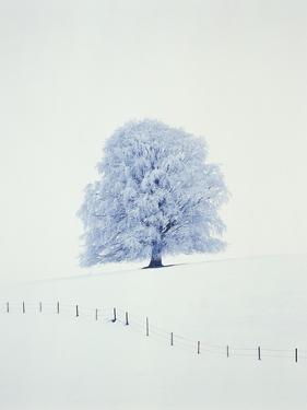 Tree in winter by Herbert Kehrer