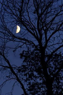 Tree, Moon, at Night, Detail by Herbert Kehrer