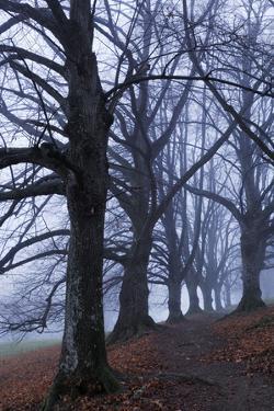Trees, Black Poplars, Late Autumn by Herbert Kehrer