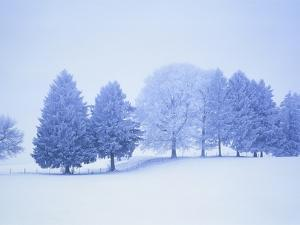 Trees in snow-covered landscape in winter by Herbert Kehrer