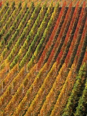 Vineyard, Germany by Herbert Kehrer