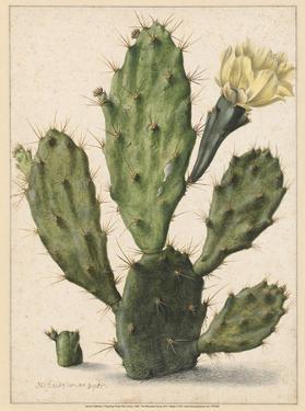 Flowering Prickly Pear Cactus, 1683 by Herman Saftleven
