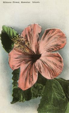 Hibiscus Flower, Hawaii