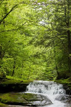 Hidden Waterfall Photo Print Poster