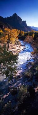High Angle View of a River Flowing Through a Forest, Virgin River, Zion National Park, Utah, USA