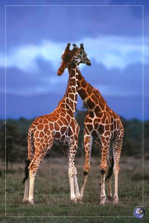 High Love, Save Our Planet (Giraffes)