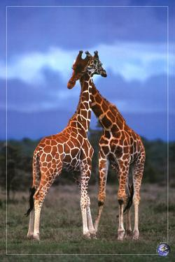 High Love, Save Our Planet (Giraffes)