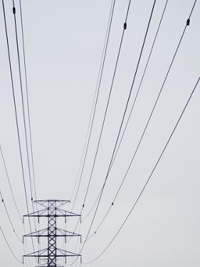 High-Tension Electrical Wires
