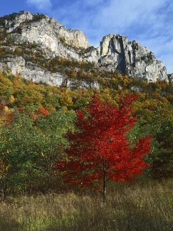 https://imgc.allpostersimages.com/img/posters/highlighed-red-tree-monongahela-national-forest-west-virginia-usa_u-L-PXRA1X0.jpg?p=0