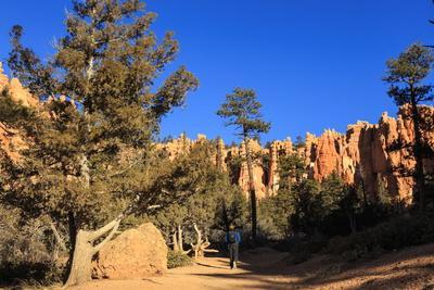 https://imgc.allpostersimages.com/img/posters/hiker-on-navajo-loop-trail-with-hoodoos-and-pine-trees-lit-by-early-morning-sun-in-winter_u-L-PQ8N3N0.jpg?artPerspective=n