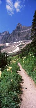 Hiking Trail at Us Glacier National Park, Montana, USA