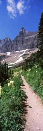 Hiking Trail at Us Glacier National Park, Montana, USA