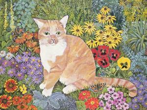 The Carpenter's Cat by Hilary Jones