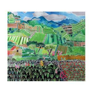 Cabbages and Lilies, Solola Region, Guatemala, 1993 by Hilary Simon