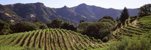 Hilltop Vineyard, Rockpile, Sonoma, California, USA