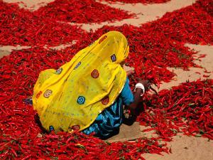 Woman Sorting Red Chillies by Hira Punjabi
