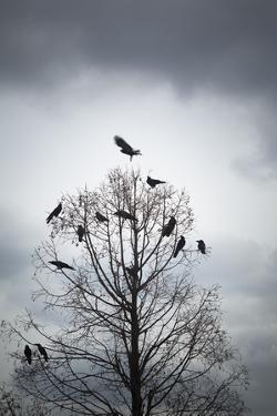A Tree in Which Many Crows Have Rest by Hiroshi Watanabe
