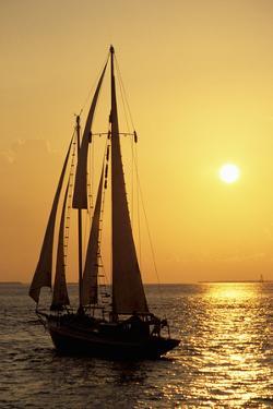 Sailboat Sailing in Golden Sunset Light, Miami, FL by Hisham Ibrahim