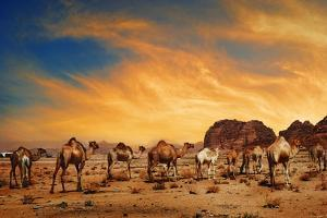 Camels In Wadi Rum by hitdelight