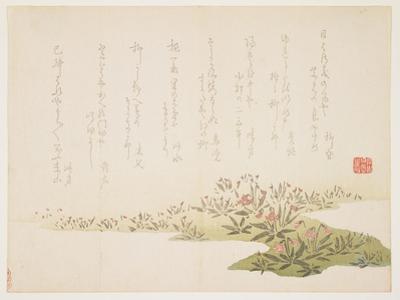 Violets, C.1848-53 by Ho Shu