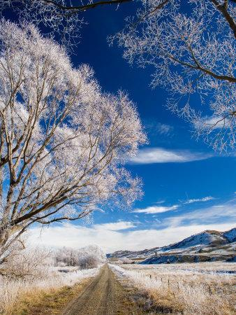 https://imgc.allpostersimages.com/img/posters/hoar-frost-and-otago-central-rail-trail-near-oturehua-central-otago-south-island-new-zealand_u-L-P2TCYQ0.jpg?artPerspective=n