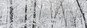 Hoar frost covered trees in forest, Brown County State Park, Indiana, USA