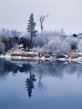 Hoar frost on Pacific willow, Deschutes River, Deschutes National Forest, Deschutes County, Oreg...