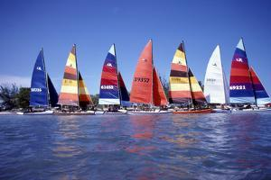 Hobie Cats Anchored and Lined Up Along the Shore, C.1990