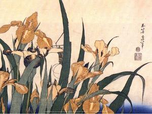 Convolvulus and Tree Frog by Hokusai Hokusai