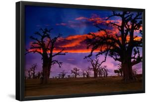 Africa Sunset in Baobab Trees Colorful Sky [Photo Illustration] by holbox