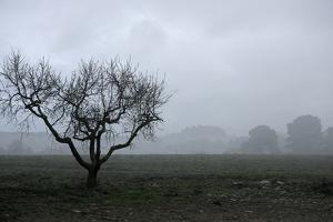 Dried Tree Vanish Into The Winter Fog by holbox