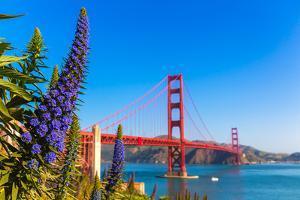 Golden Gate Bridge San Francisco Purple Flowers Echium Candicans in California by holbox