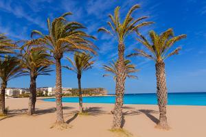 Javea Playa Del Arenal Beach in Mediterranean Alicante at Xabia Spain Palm Trees by holbox