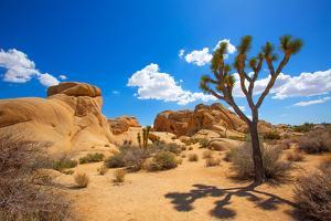 Joshua Tree National Park Jumbo Rocks in Yucca Valley Mohave Desert California USA by holbox