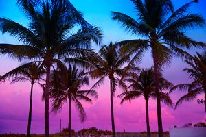 Miami Beach South Beach Sunset Palm Trees in Ocean Drive Florida by holbox