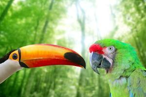 Toco Toucan And Military Macaw Green Parrot by holbox
