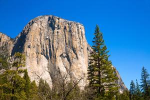 Yosemite National Park El Capitan California USA by holbox