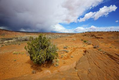 https://imgc.allpostersimages.com/img/posters/hole-in-the-rock-road-near-escalante-utah-offers-many-scenic-spots_u-L-PU3F6X0.jpg?artPerspective=n